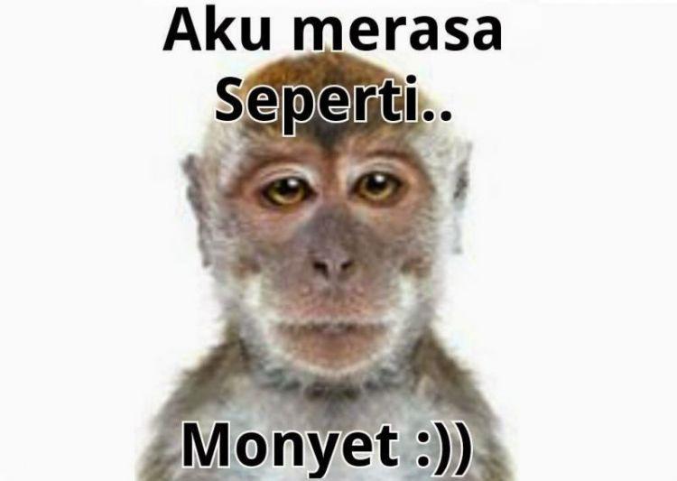 monyet apa jomblo